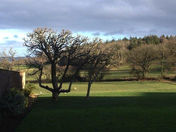 Apple+tree+pruned+Devon+-+23+12+2014