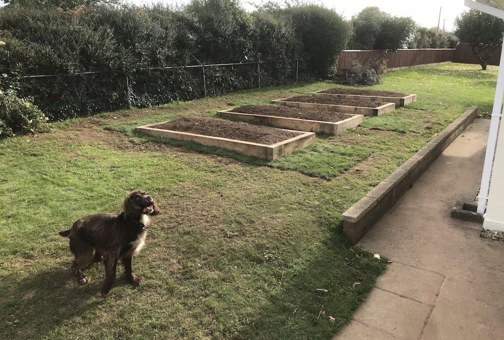 Oak sleeper raised beds – nr Exeter