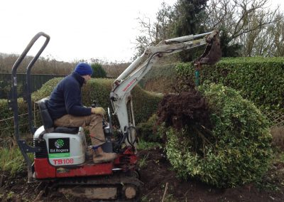 Digging Up And Moving Shrubs