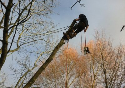 Tree surgery for all sorts of trees