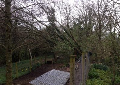 Fallen oak tree cleared up