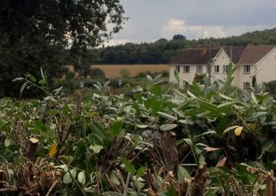 Laurel hedge tidied in Brampford Speke