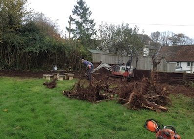 Large leylandii and old tree stumps removed